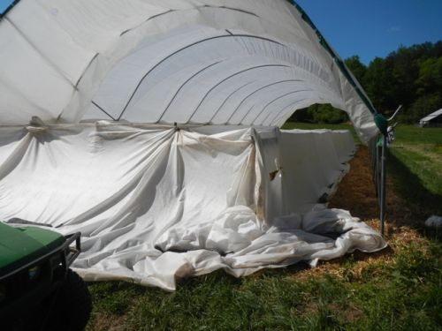 "Tomatoes under their frost blanket ""tent"" for May 13th frost"