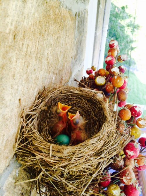 Baby Robins on the Porch