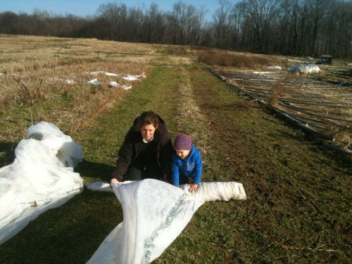 Here we are, rolling up ground cover
