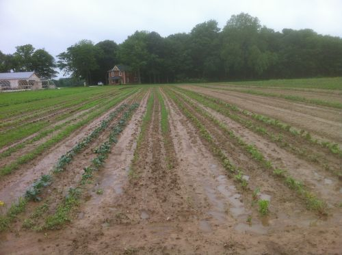 Vegetables and weeds growing well