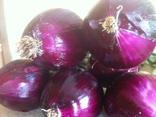 Red bulb onion