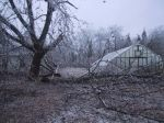 branches missed the hoophouse