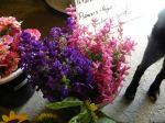 blue and pink salvia from cutting garden
