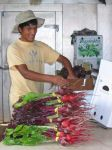 Ruben packing Beets