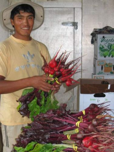 Packing beets