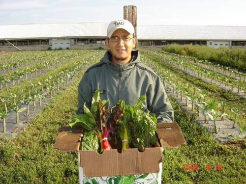 Showing off a box of rainbow chard