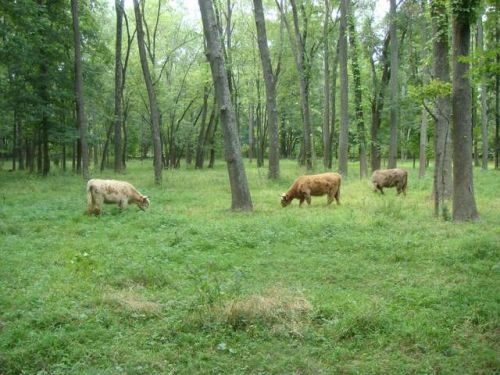 Grazing in awooded lot