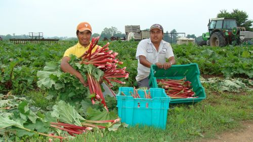Pickers with their harvest