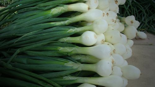 Walla Walla Sweet Onions- Delicious grilled
