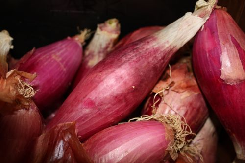 Red Long of Tropea Onions