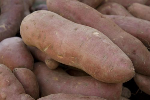 Beauregard Sweet Potatoes