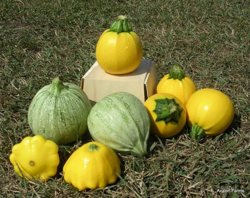 Summer Squash - 8-Ball, Round de Nice and patty pan