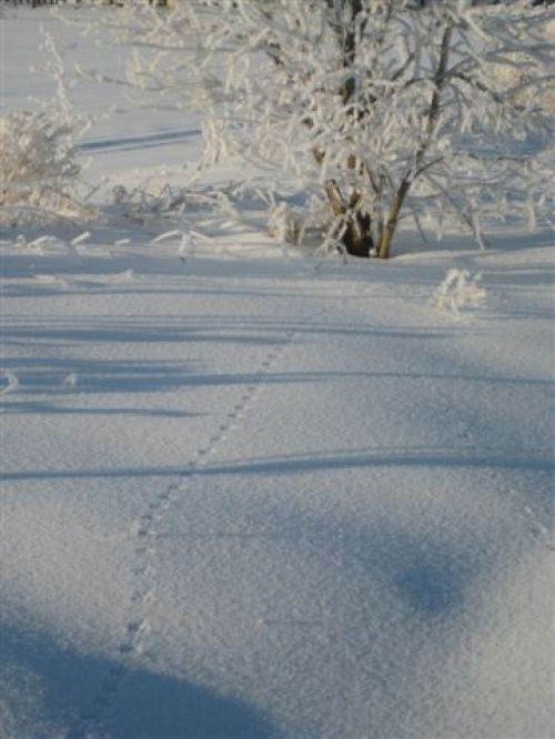 Winter at the Farm - Tracks in the Snow