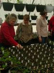 Pam and Barbara talking seedlings
