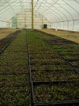Seedlings in a new greenhouse at Nu Way Farm