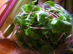Radish micro greens in the CSA box