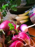 Radishes and green onions in the CSA box