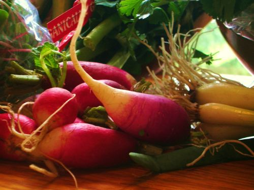 French breakfast radishes in the CSA box