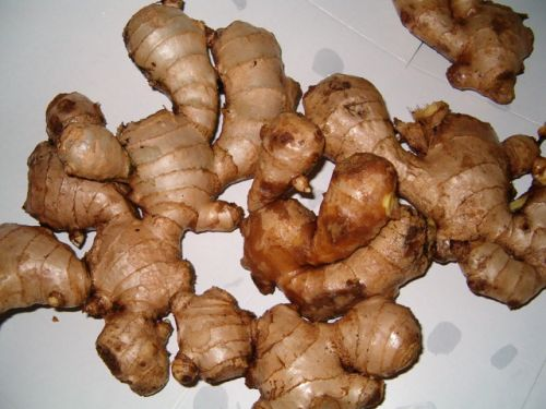 Hawaiian ginger (mother rhizome), locally grown