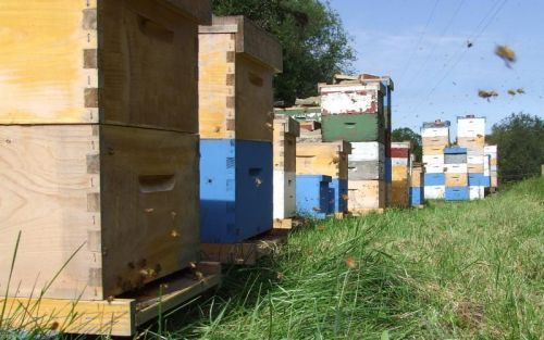Bedillion Honey Farm