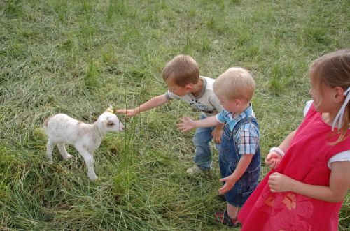 The children meeting our first lambs of 2011