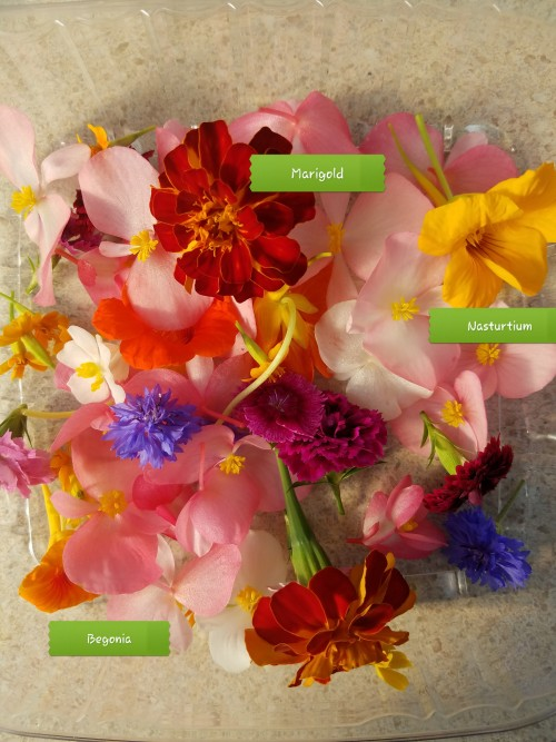Edible Mixed Flowers