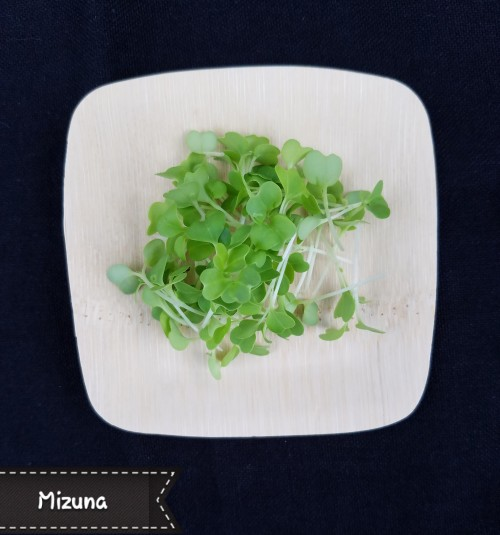 Mizuna. White stem, green leaf, mild flavor