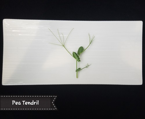 Pea Tendril. A perfect pea flavor