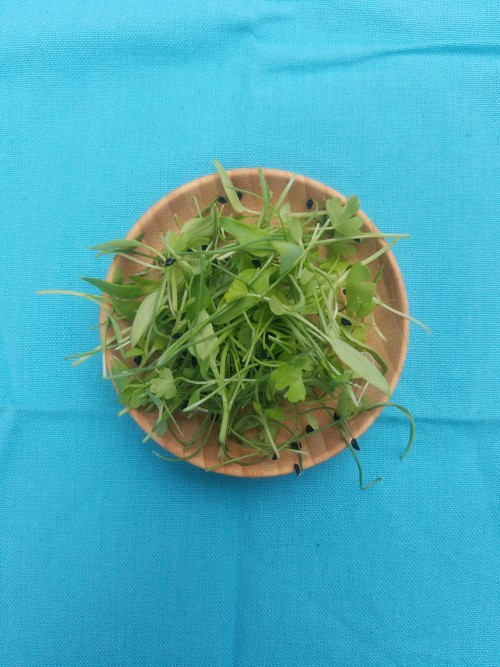 Trinity Mix. A delicious mix of Pepper Microgreens, Oniony Chives, and Celery Microgreens