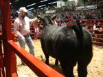 Seling at Beef Expo