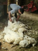 Shearing in the spring
