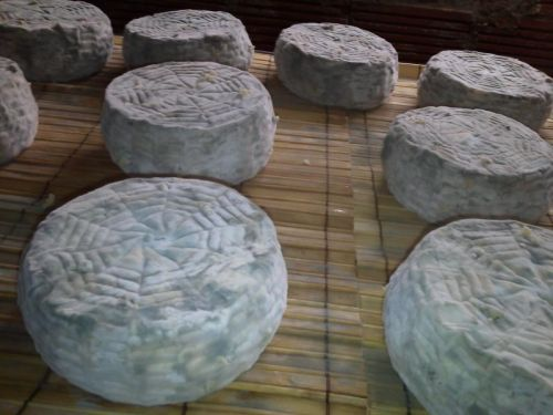 Young bluing cheeses