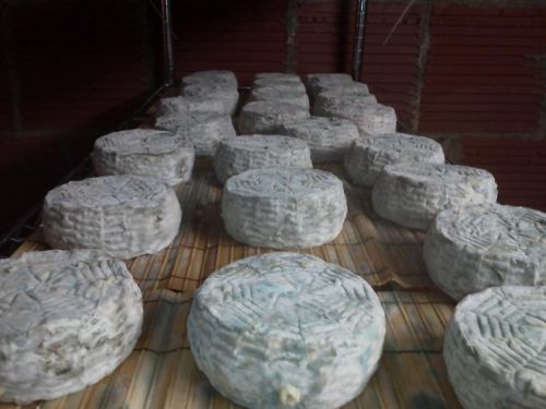 Cow's Milk Blue Cheese in the Cave