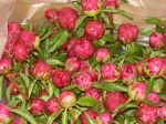 Peony order for wholesaler