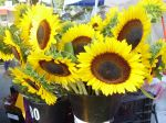Single stem sunflowers at market