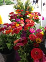 Zinnia at market