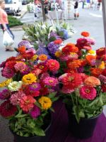 Zinnia bunches at market