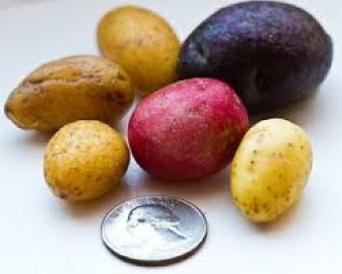 Potato - Tiny Taters