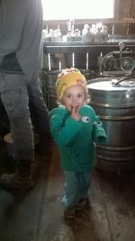 Amelia steals at taste of maple syrup while Dad is bottling at Holiday Brook Farm