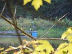 Great Blue Heron on Irrigation pipe Dock