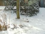 Birds near Feeder