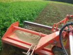 Tilling in field peas