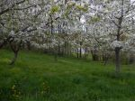 Lower Orchard May 4