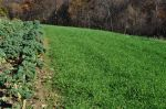 Kale next to Rye Cover Crop