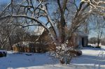 Elm and barn after Snow
