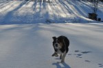 Molly on frozen pond