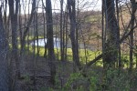 Late Day; pond thu woods