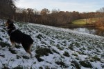 Molly undeterred by snow