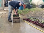 Hans washing Beets