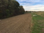 Beautiful Tomato Field after Teardown, seeded to Rye